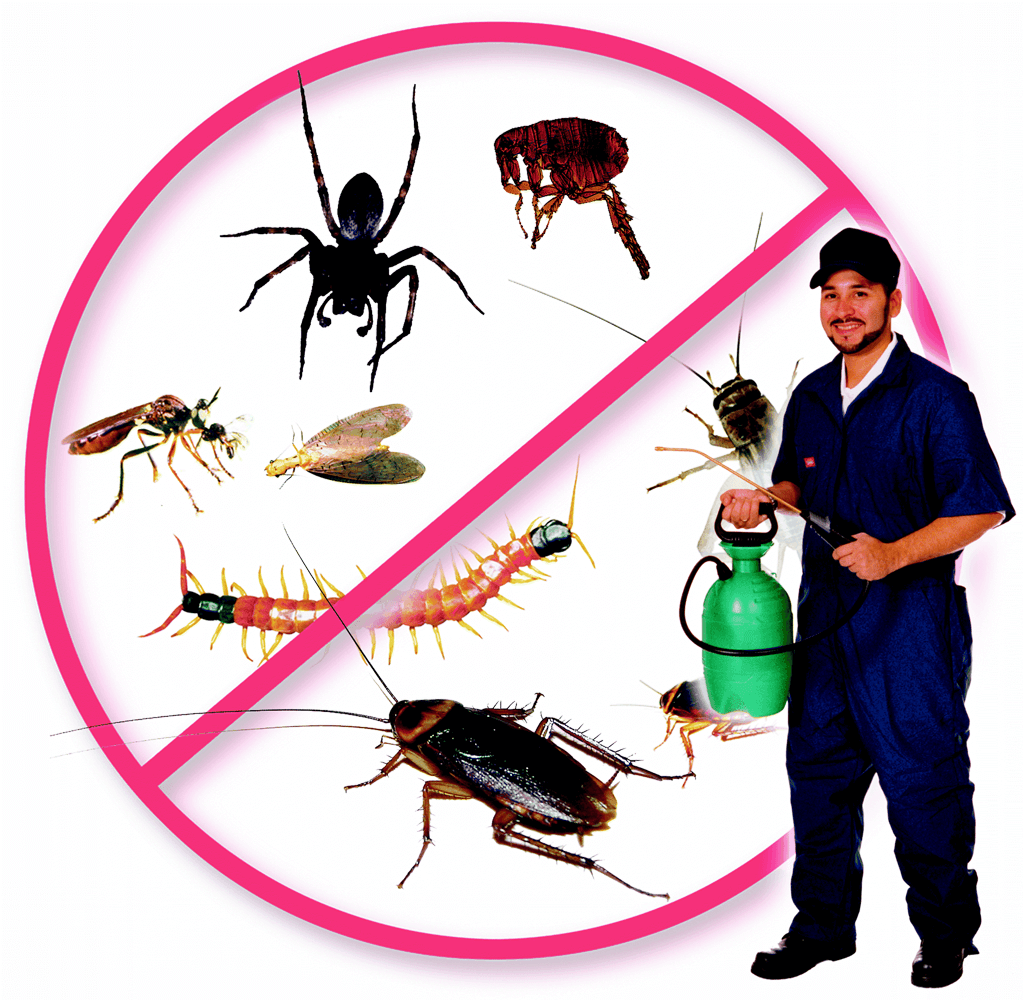 شركة مكافحة حشرات بجده