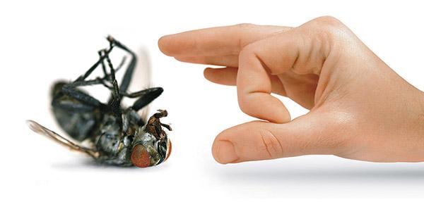 شركة مكافحة الحشرات بمكه
