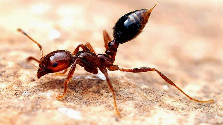 شركة مكافحة النمل الاسود بالمدينة المنورة