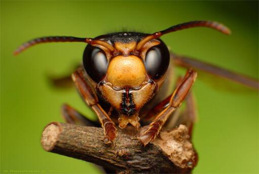 شركة مكافحة النمل الاسود بحائل