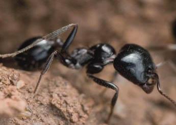 شركة مكافحة النمل الاسود بمكه