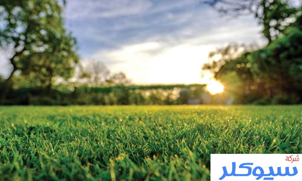 شركة تركيب وتوريد العشب الطبيعي بالطائف