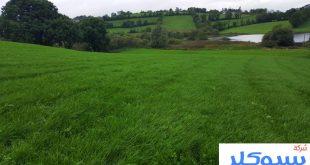 شركة تركيب وتوريد العشب الطبيعي بجدة