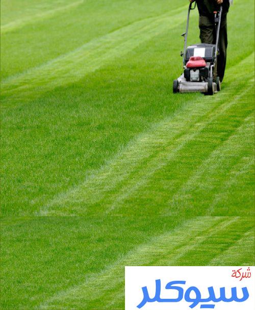 شركة تركيب وتوريد العشب الطبيعي بخميس مشيط