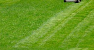 شركة تركيب وتوريد العشب الطبيعي بحائل