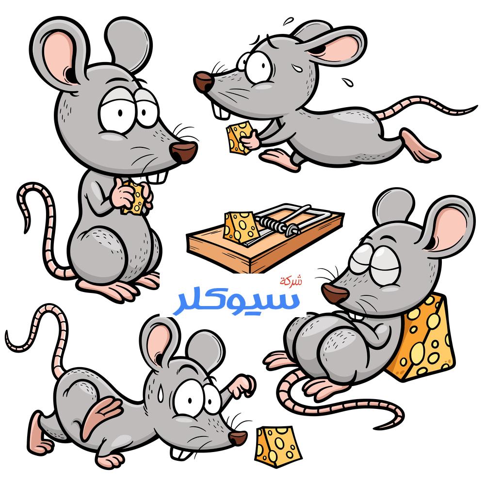 شركة مكافحة الفئران بالباحه