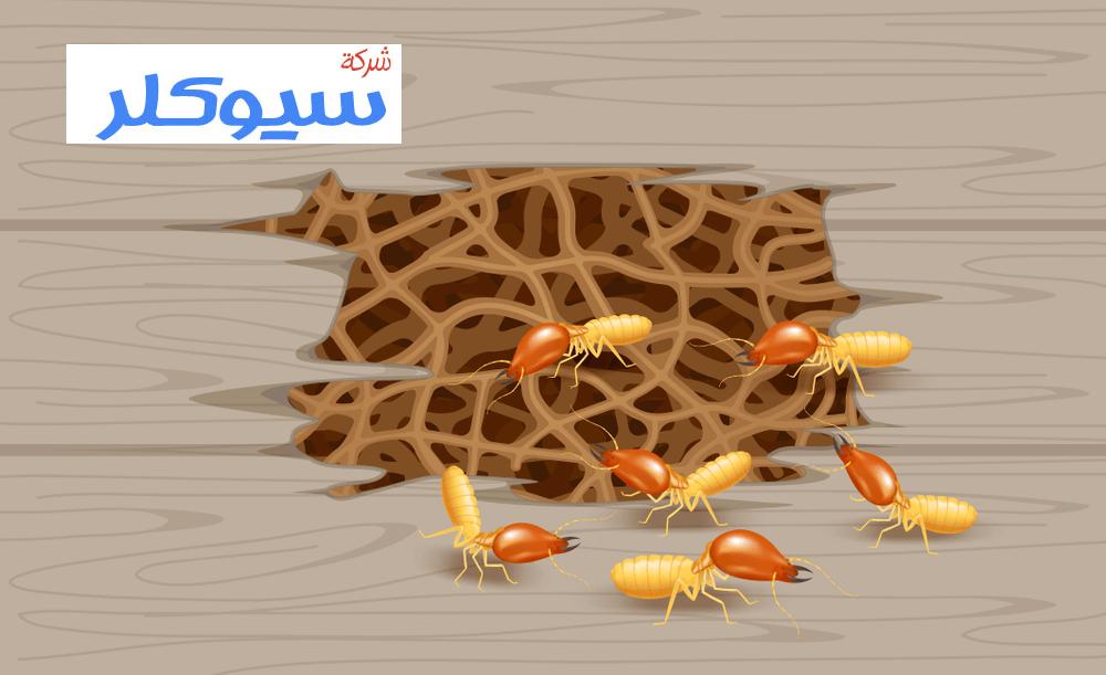 شركة مكافحة النمل الابيض بالباحه