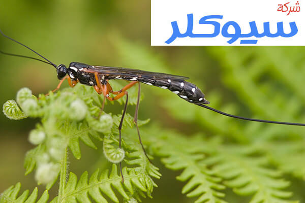 شركة مكافحة حشرات بخميس مشيط