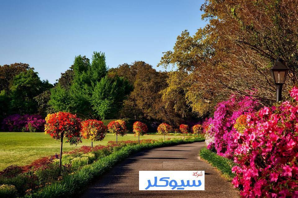 منسق حدائق بخميس مشيط