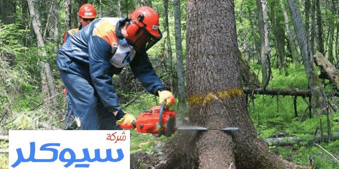 شركة تقطيع اشجار بالدمام