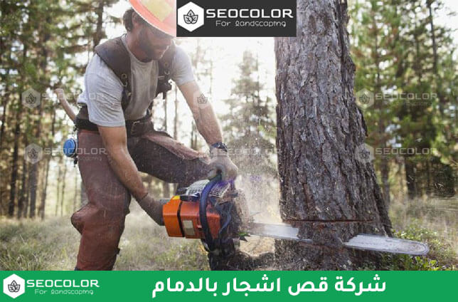 شركة قص اشجار بالدمام