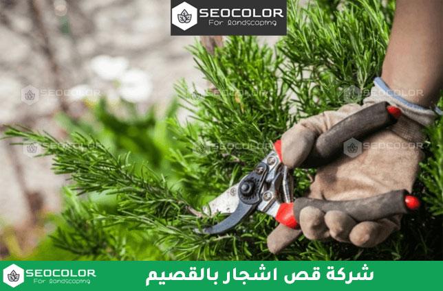 شركة قص اشجار بالقصيم
